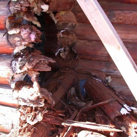 Log restoration 08